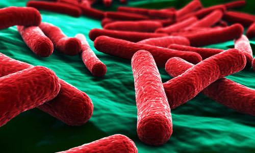 bryushnoy tif bakteriya