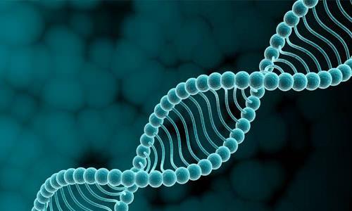 гипертрихоз гены
