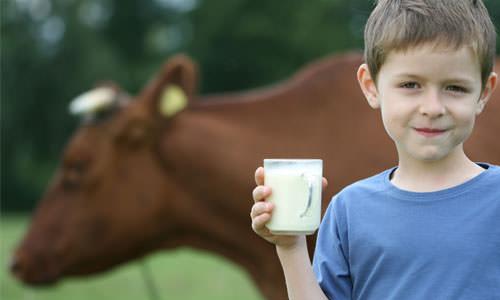 Каждый человек, контактирующий с крупным рогатым скотом, должен знать о такой опасной болезни